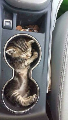 Heeeeyyyy! My car didn't come with a cat holder! Not fair! Image found on amazinganimalphotos.