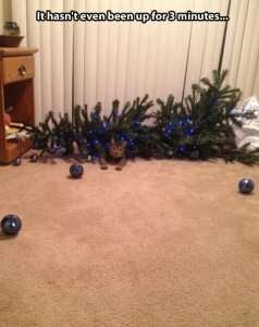 Cat 1, tree 0. Image found on themetapicture.