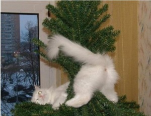 C'mon! Everybody's decorating their trees with cat butts! Image found on wanna-joke.