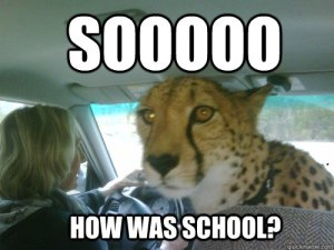 "Do you really want to challenge the cheetah on using ""so?"" Image found on quickmeme."