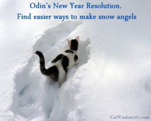 Of course, with the weather we've been having, he'll have to make dirt angels! Image found on catwisdom101.