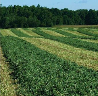 This kind of swath (strictly agricultural) I can deal with. Image found on Sharpe Farm Supplies.