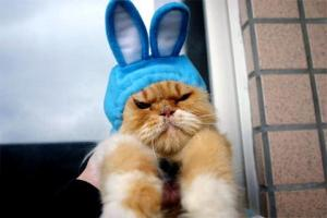 Easter bunny? Ate 'im ... kinda gamey. Image found on funlol.
