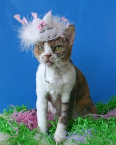 In my Easter bonnet, with all your blood upon it ... Image found on BuzzFeed.