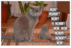 Pretty much every morning for me. Good thing the boy's cute! Image found on Sizzle.