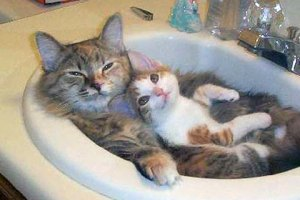 Yes, me mommy bathes me in the sink ... so? Image found on BandofCats.
