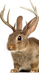 I always wanted a jackalope ... if I ever get one, I'll have Petsmart's handy-dandy guide to help me out. Image found on Petsmart.