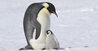 Thanks, Pop, for being there for me. Could you go away now? Image by Thomas Kokta, Getty Images, found on Discovery Kids.