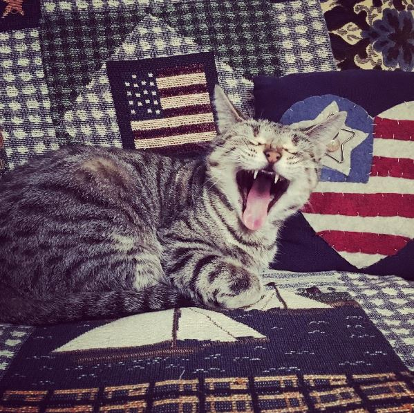 Sunday patriotic | Serenity is a fuzzy belly