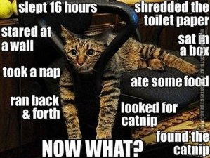 Oh, wait, is that more nip? Image found on funcatpictures.