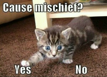 I've really behind on the mischief, people. Outta my way! Image found on Pinterest.