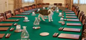 The Cabinet meeting starts in 15 minutes! Where are the catnip mice?? Image found on Modern Cat.