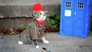 Yeah, I'd prefer the 10th Doctor, but can you image trying to get a long brown coat and sneakers on a cat??? Image found on Pinterest.