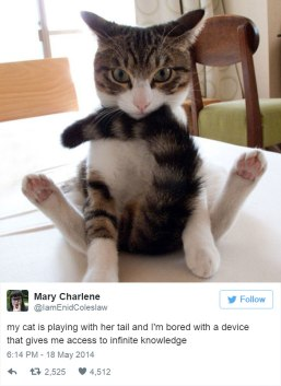 "No, I'm doing yoga! This position is ""Irritated Kitty."" Image found on BoredPanda."