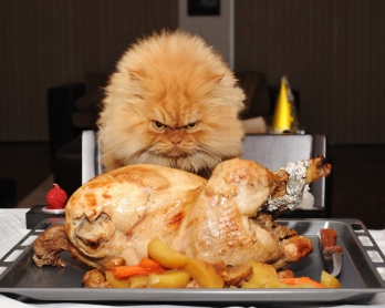 I don't know what you're eating, but this is all mine! Image found on Huffington Post.