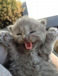 I'm a big, scary monster .... grrrrr! Image found on Cute and Funny Pictures and More.