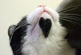 It is indeed possible for a kitty chin to be even cuter. Image found on funniesrus.