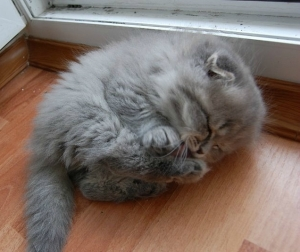 I'm pretty sure there's a kitten in there under all the adorable floof. Image found on Imgur.