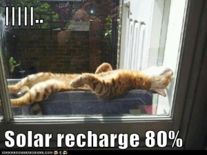 The only bad thing about this solar motion-sensor cat is the long recharge time ... Image found on Pinterest.