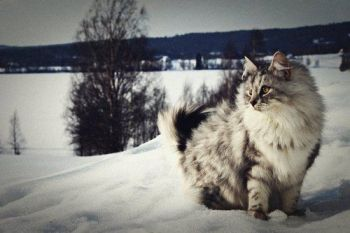 Yeah, you wish you could be me. I'm majestic as hell. Image found on Attack of the Cute.