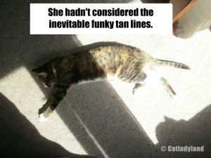 And then she thought: Spray tan! (But not that funky Cheeto-colored stuff.) Image found on CatLadyLand.