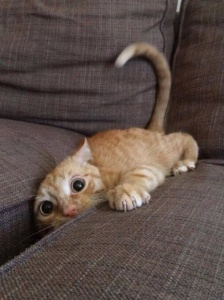 I don't know if burrowing in the couch will help ... I might have to drill into the foundation. Is that OK? Never mind, I'm doin' it. Image found on SureAwesomeness.