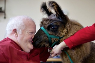 I now have an inexplicable urge to smooch a llama. Image by Jen Osborne found on Slate.