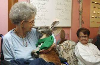And even kangaroos can provide comfort. Image found on L.A. Unleashed blog (Los Angeles Times).