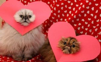 Dear human, for subjecting us to this, we shall dine on your heart tonight. Happy Valentine's Day! Image found on Rebloggy.