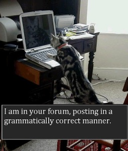 If only more cats would do this, I would have a lot less stress on comment boards. Image found on GrammarBlog.